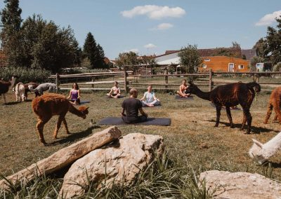 Yoga mit Alpakas