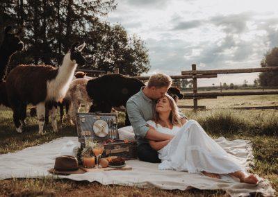 Picknick mit Alpakas auf der Wiese: Ein unvergessliches Erlebnis