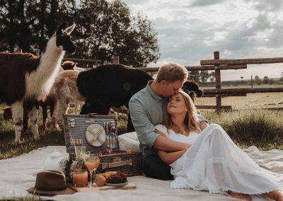 Ein Picknick mit Alpakas in freier Natur
