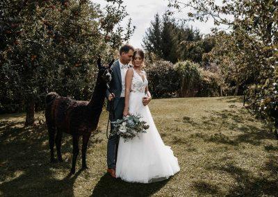 Hochzeit Fotoshooting mit Alpakas