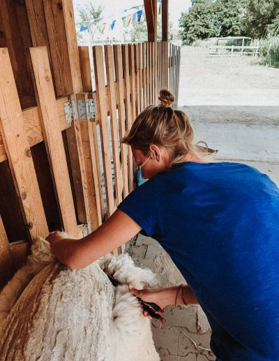 """Alpaka Vlies: so wird die """"Wolle"""" geschoren."""